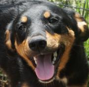 Tierschutz DORIAN 1 5 Jahre