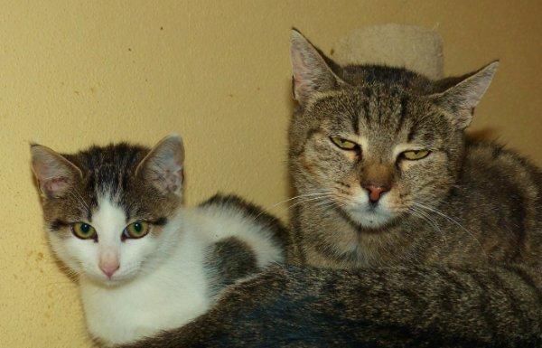 Tierschutz-Katzen suchen » Katzen