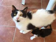 Trixie Kuschelglückskatze Tierschutz