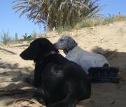 Urlaub mit Hund -