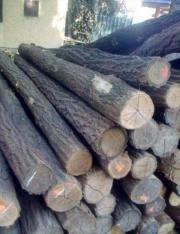 Zaunpfosten aus Akazienholz!