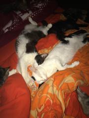 Zwei wundervolle Katzen