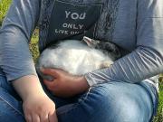 Zwergkaninchen Rhönmix Kaninchen